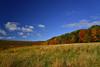 Meadow Near Shackham Rd