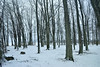 Campground, Oneida Shores Park