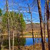 Beaver Flooding, Trail to Moon Lake