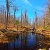 Beaver Pond, Trail to Moon Lake