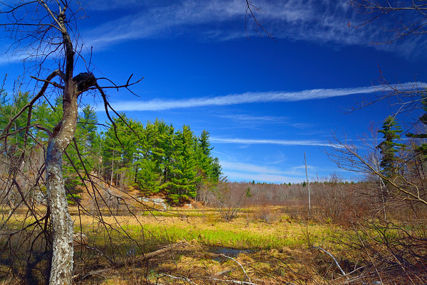 Wolf Lake State Forest