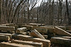 2/15/2009   Hundreds of recovered original cut granite stones stored next to the C&O Canal Towpath many of which will be reused to rebuild the aqueduct. During the winter months the Potomac River is visible through the trees.