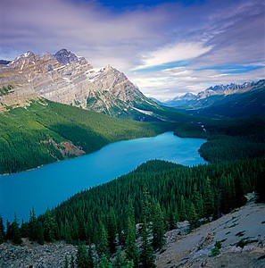 Peyto Effects