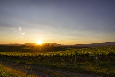 napa sunset