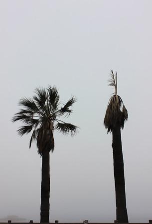 happy palm / sad palm