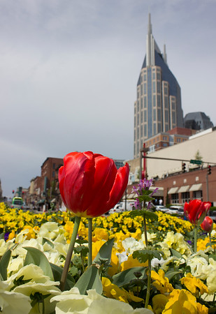 music city in bloom