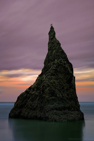 """Bandon's Monolith and Translucent Seagull"" (Oregon)"