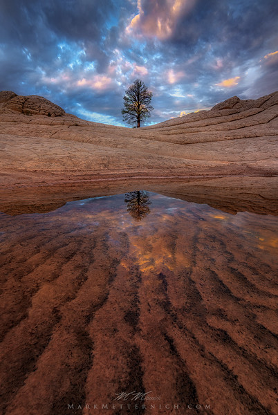 """Tree of Life"" (Vertical) - Remote Arizona"