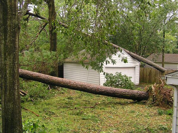 Join the Houston area Share-A-Tree Foundation<br /> Hurricane Ike