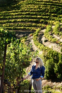 CALIFORNIE. NAPA VALLEY & SONOMA. NEWTON VINEYARD. ICI PORTRAIT DE MAYACAMAS OLDS ( HEAD OF VITICULTURE )