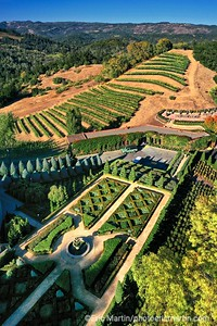 CALIFORNIE. NAPA VALLEY & SONOMA. LES JARDINS A LA FRANCAISE DU DOMAINE NEWTON VINEYARD