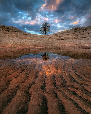 """Tree of Life"" (Vertical) - Remote Arizona"
