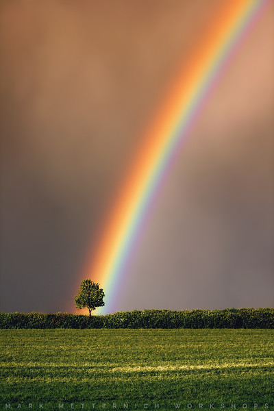 Rainbow Tree of Life