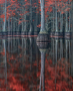 Cypress Red