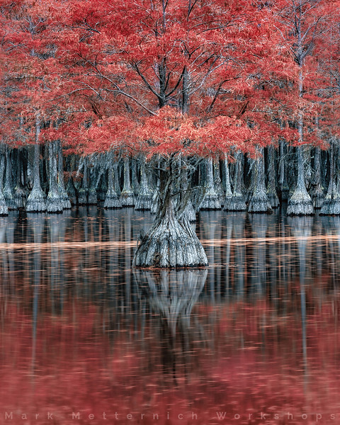 Cypress Dreams and Waterways