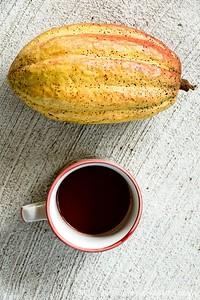 REPUBLIQUE DOMINICAINE. CLUB MED MICHES PLAYA ESMERALDA DANS LA BAIE DE SAMANA. Ici une plantation de cacaoyers geree par une association de femmes. Produit sans aucun pesticide et récolté avec les méthodes traditionnelles, le cacao de République Dominicaine est l un des meilleurs au monde. Tasse de chocolat chaud aux epices