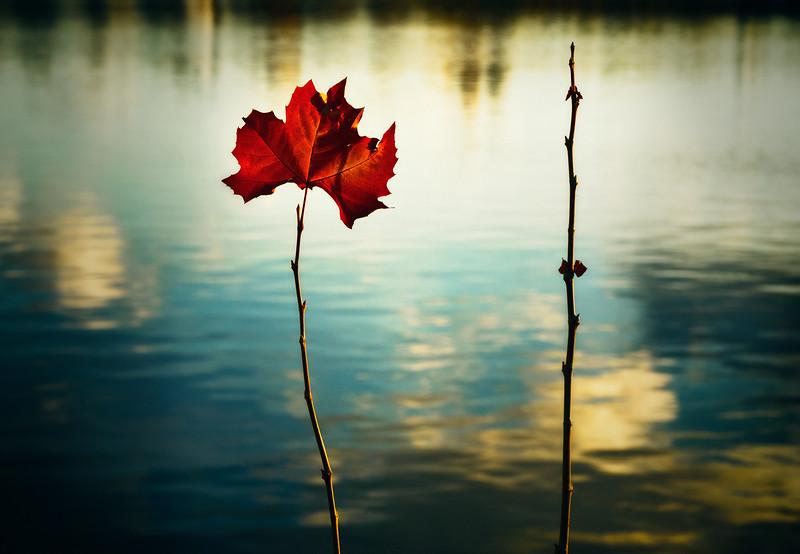Last Day Leaf