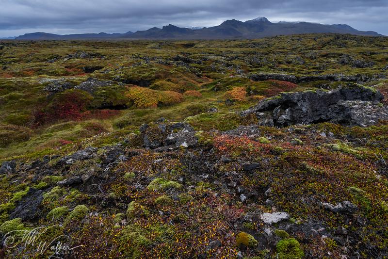 Iceland - Snaefellsness Peninsula-21.jpg