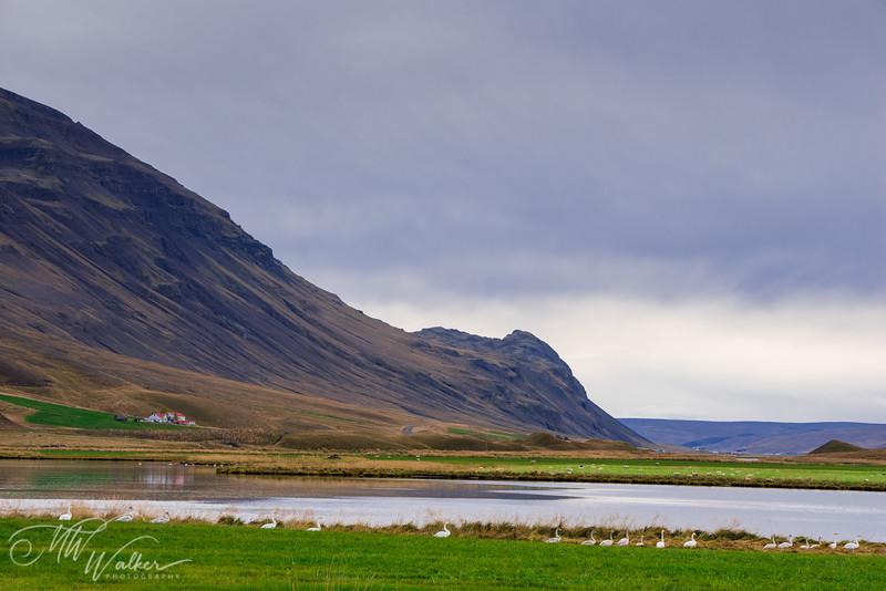 Iceland- West Iceland-18.jpg