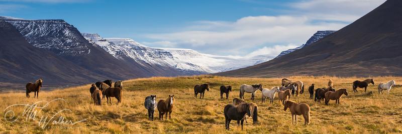 Iceland- West Iceland-15.jpg