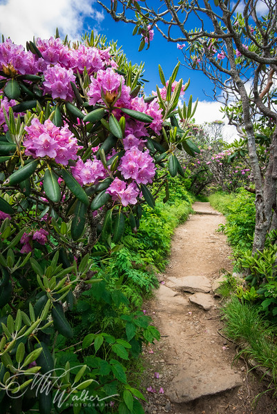 Craggy Trails
