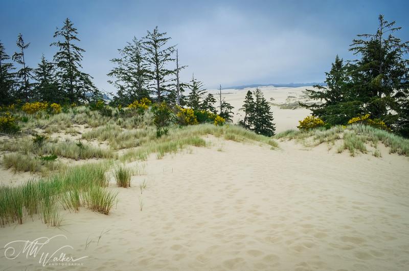 Endless Sand Dunes, Oregon National Recreation Area