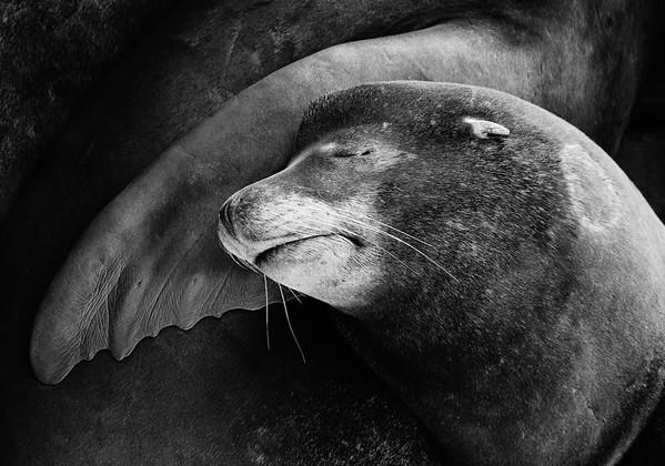 Finley Sealface