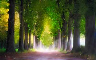 Forest By Enlightenment