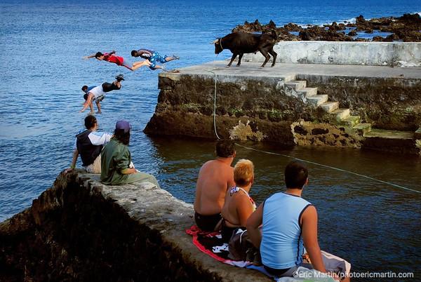 ILES DES ACORES A Terceira, les courses à la corde où chacun joue à s'approcher au plus près des toros.