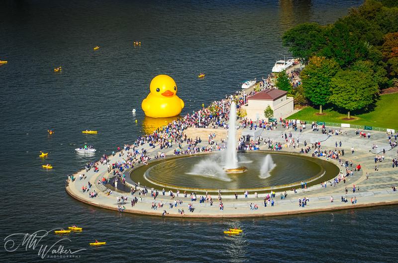 Duck and Kayaks