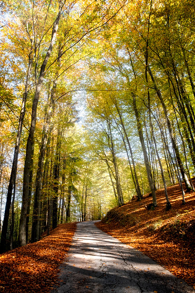 Gilded Road