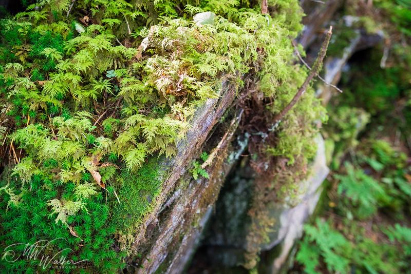 Smoky Mountain National Park-15.jpg