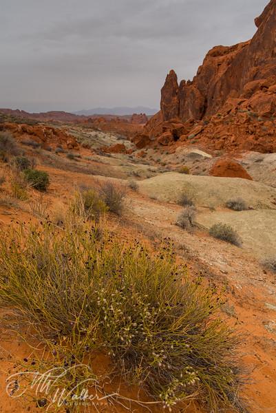 Valley of Fire-4.jpg