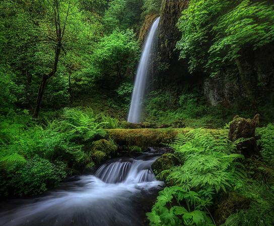 Oregon Oasis