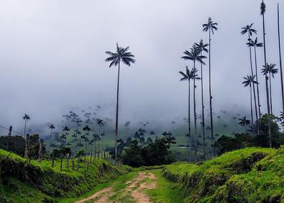 VALLE DE COCORA - COLOMBIA