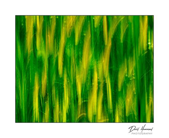 Mermet Foliage