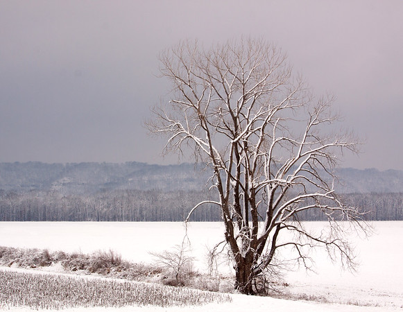 LaRue-Pine Hills Tree