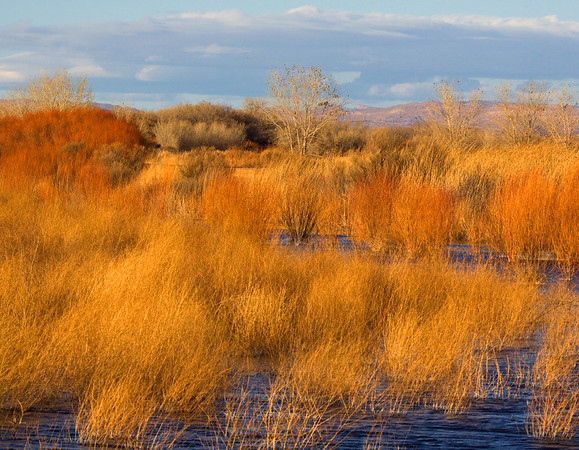 Rio Grande backwater at Bosque del Apache