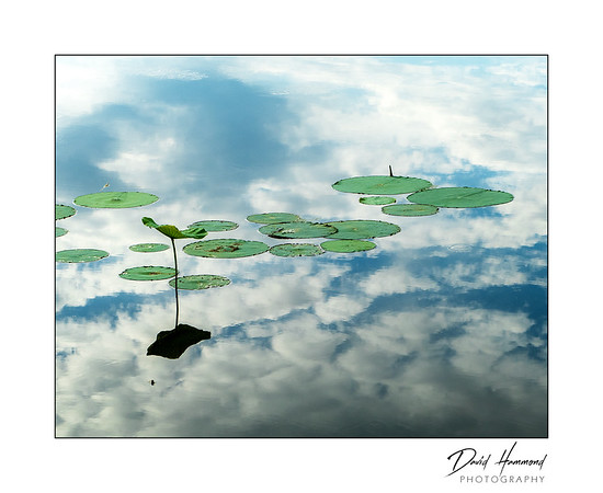 Lily Pads & Cloud Reflections