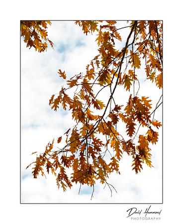 """Autumn Joy"""