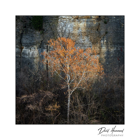 Late Autumn tree at LaRue-Pine Hills
