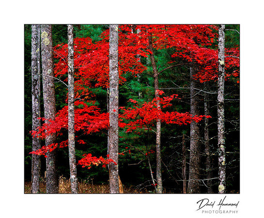 """""""Simply Red"""""""