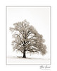 """Iced Tree"""