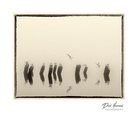 Fog/Seagulls