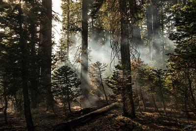 Brume & forêt