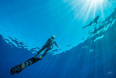Ai Futaki & requin pointe noire
