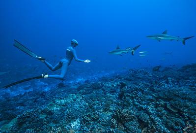 Alice Modolo & requins gris