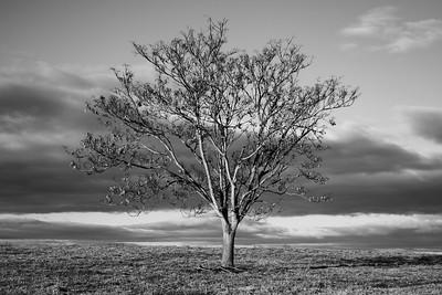 Fall Tree Against Sky