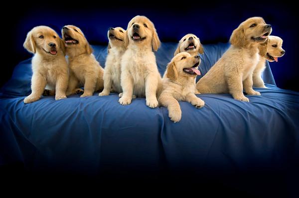 Puppies E full 4837 copy