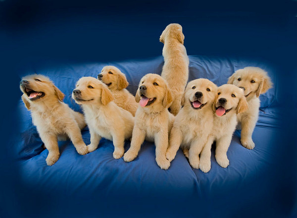 Puppies J 4759 copy